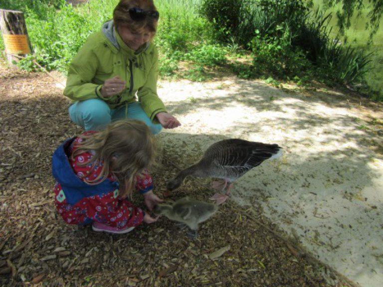 Ein Mädchen füttert auf einem Naturgrundstück eine Ente.